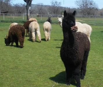 Full fleece Sassie - March 2014