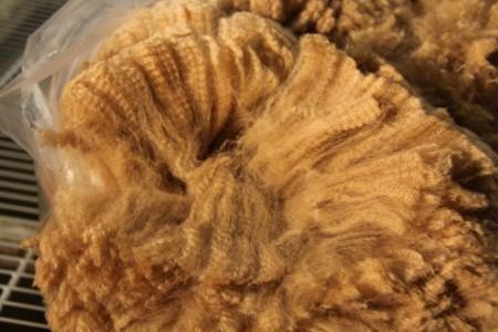 Galahad's fabulous fiber